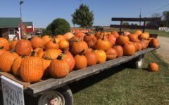 Pumpkins at Today's Harvest.